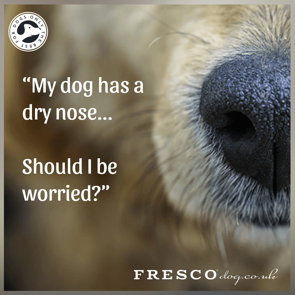 "Top 4 Reasons - What causes a ""Dry Dog's Nose"""