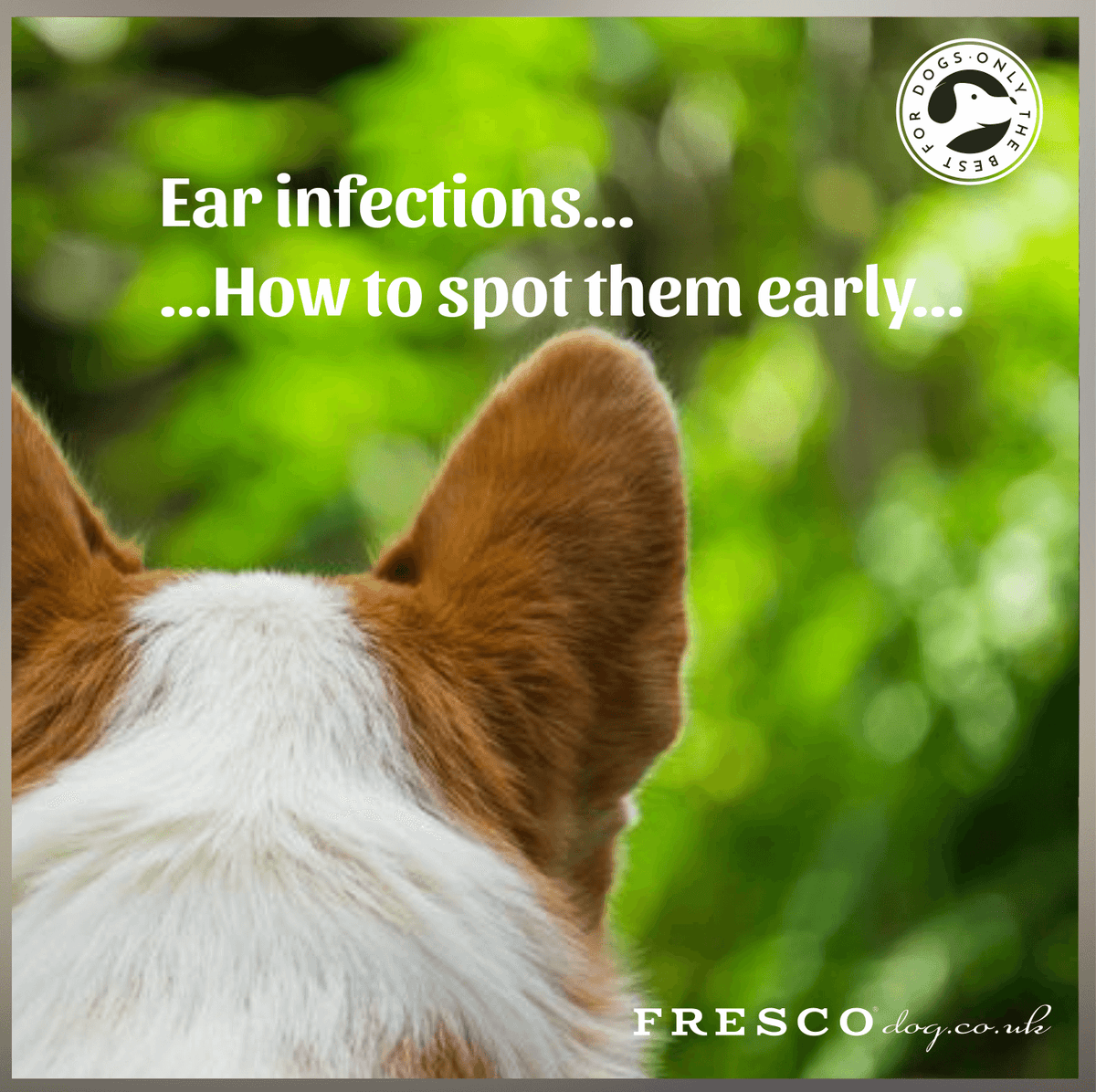 Dog ear infections....What are the signs?