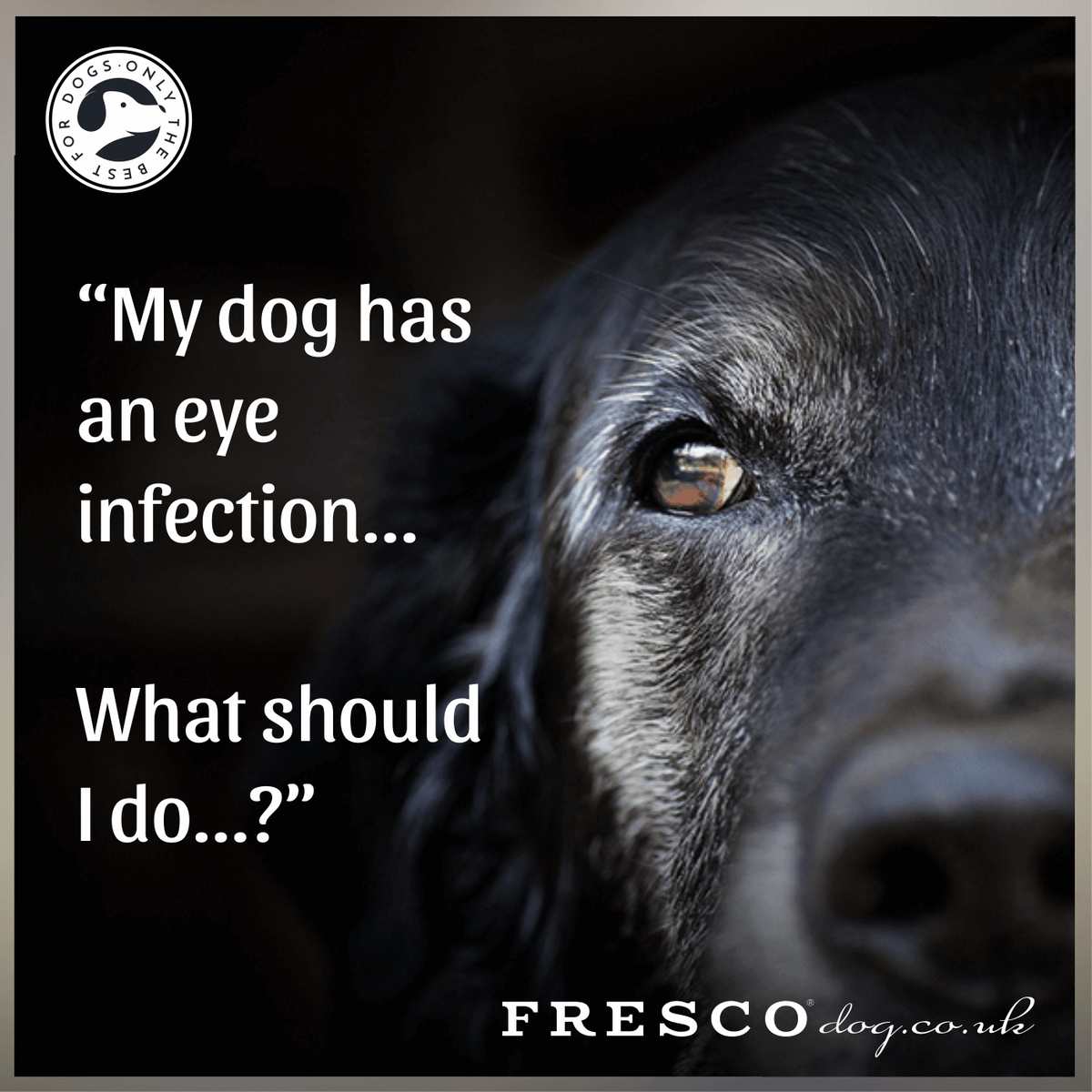 Does my dog have Conjunctivitis? Tips & Cures