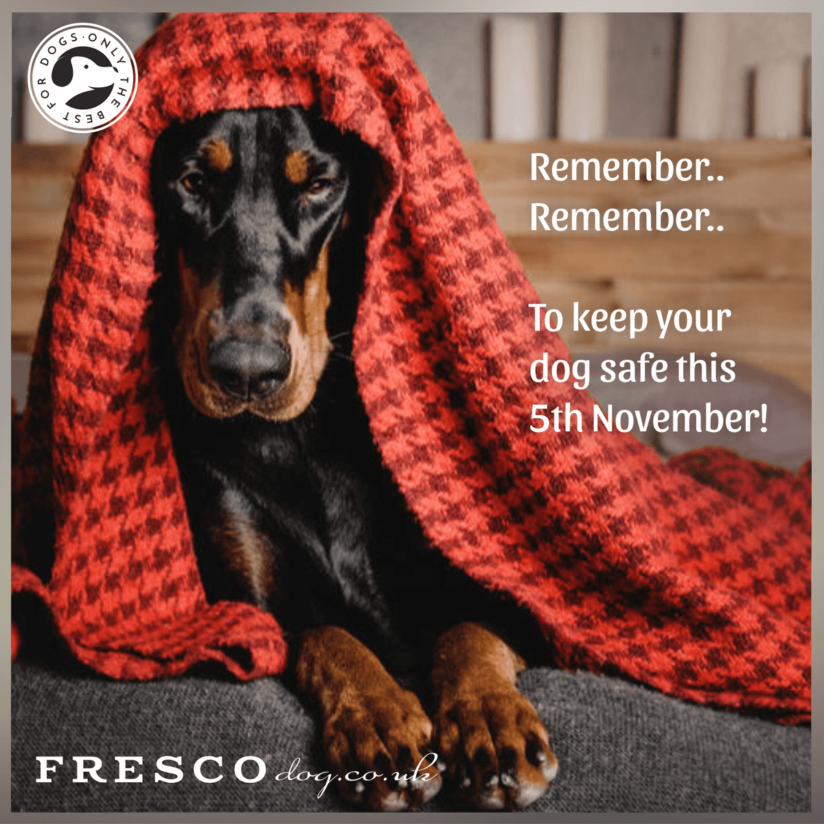 Remember, Remember to keep your dog safe this 5th of November!