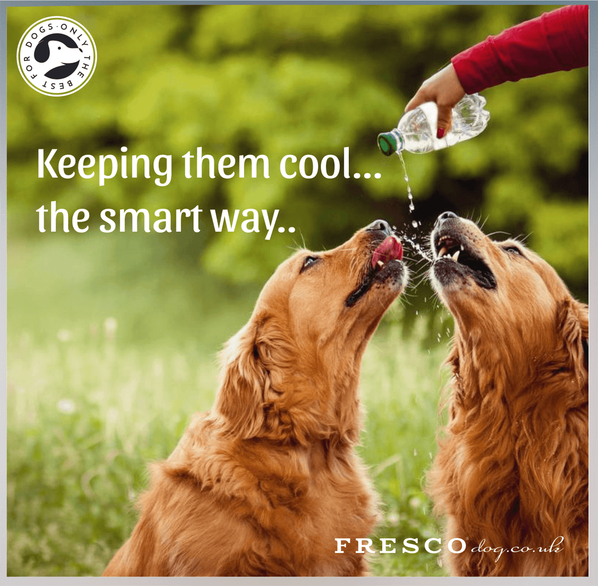 Keeping your dog cool....the smart way