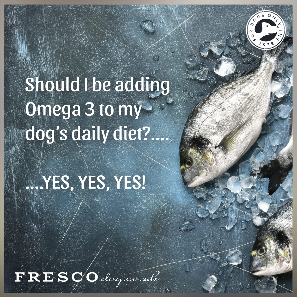 Should I be adding Omega 3 to my dog's diet?