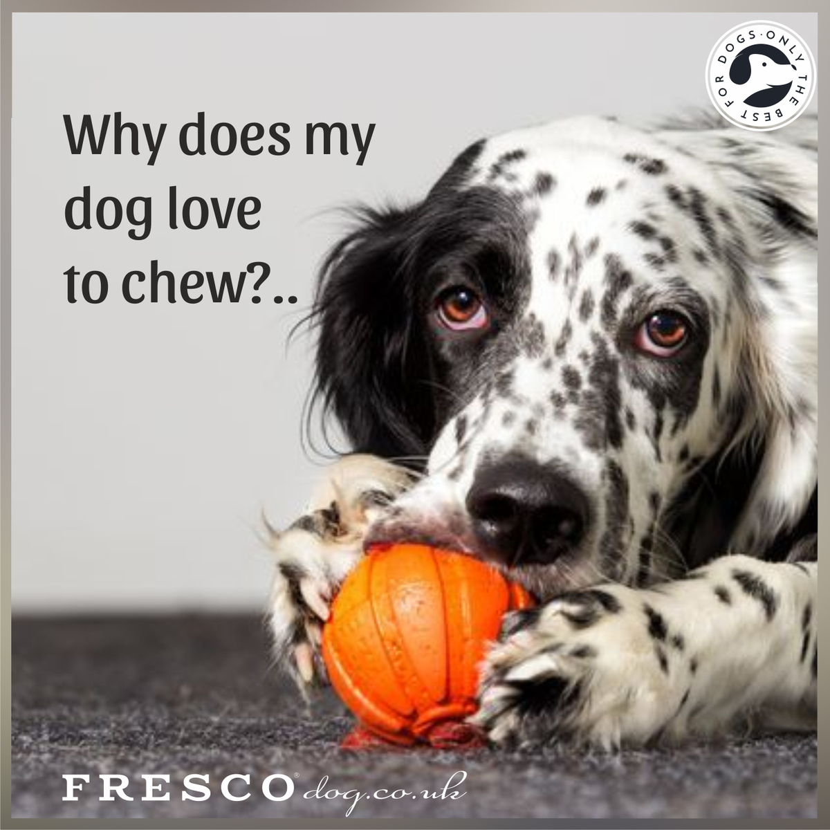 Why do dogs simply love to chew?