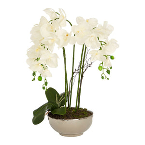 Flora White Orchid