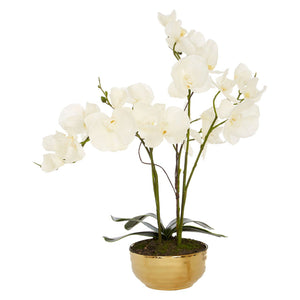 Flora White Orchid With Gold Pot