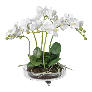 White Small Orchid Phalaenopsis in Glass