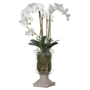 White Phalaenopsis Orchid Centrepiece in Glass Urn