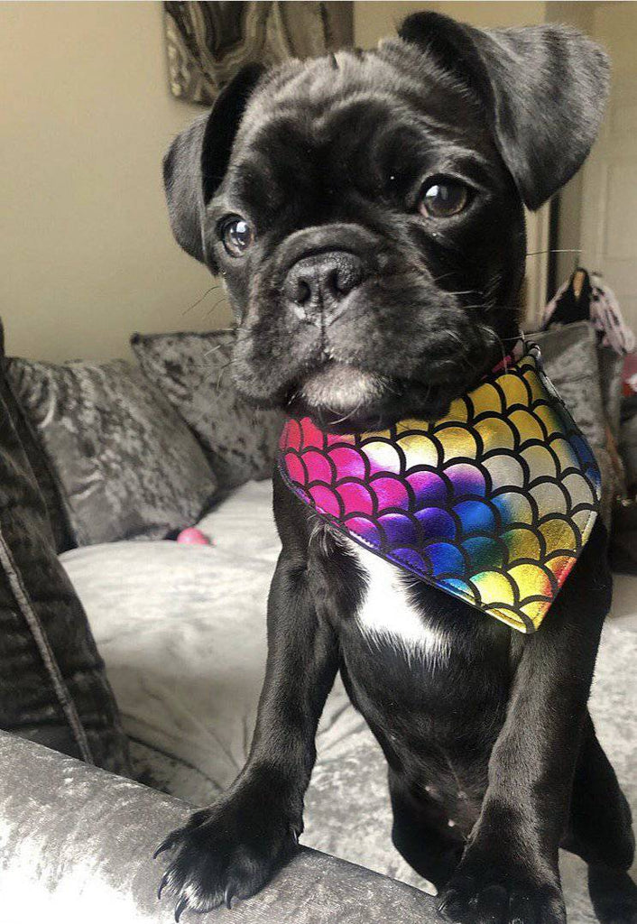 multi coloured bandana