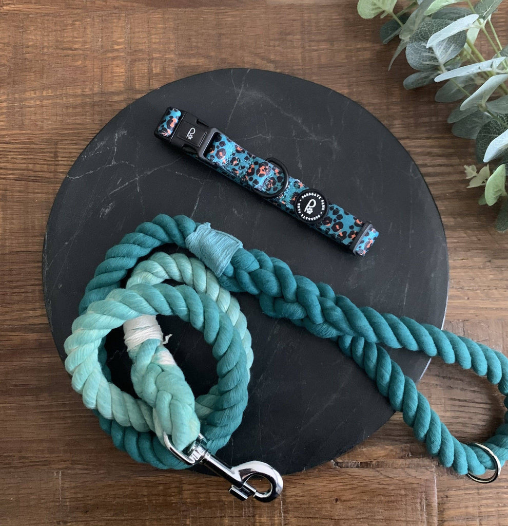 Teal Collar and Lead