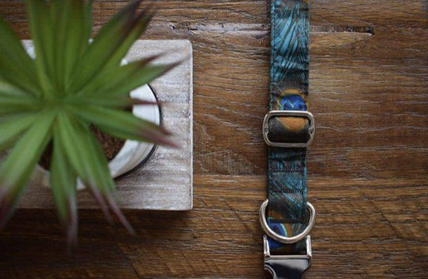Handmade Dog Collar | Shake Your Tail Feather - Parkgate Paws
