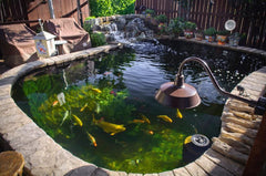 Important About Water Quality in Koi Ponds