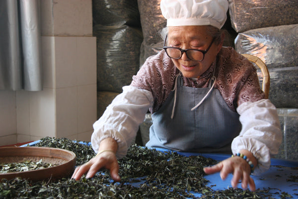 Making white tea - Dragonfly Tea