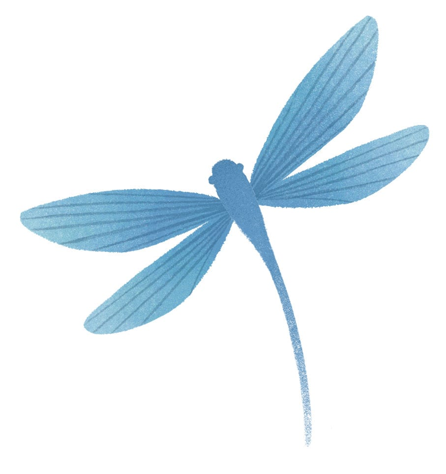 Mini Dragonfly Image