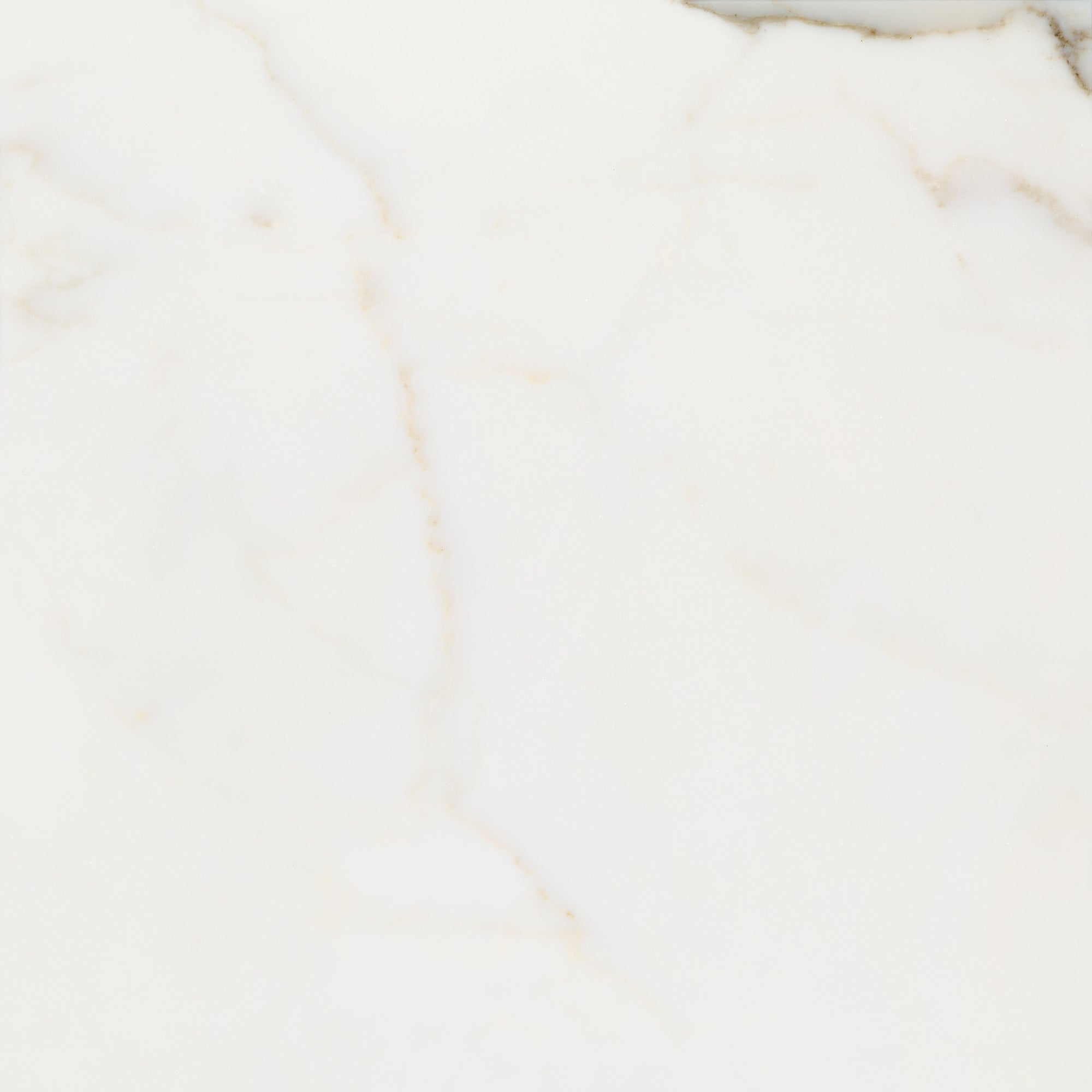 Calacatta Gold B Marble Field Tile product photo