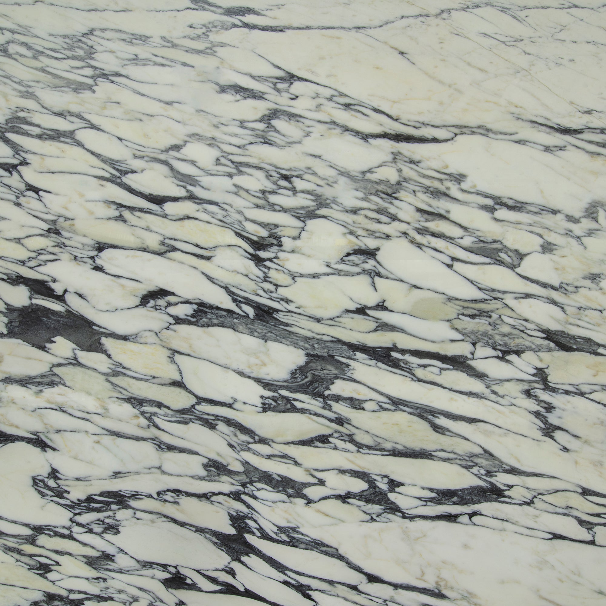 2cm Arabescato Corchia Marble Swatch Card  Polished Samples Slab product photo