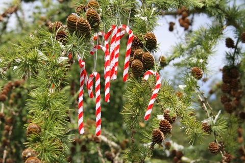 Set of Ten Candy Cane Decorations.