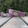 Amethyst Dog Collar Silver Collection