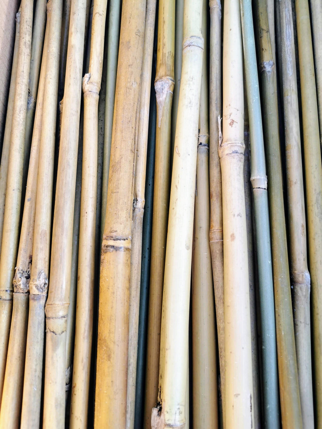 Bamboo stakes 65cm 10-12mm thick - 200 pack