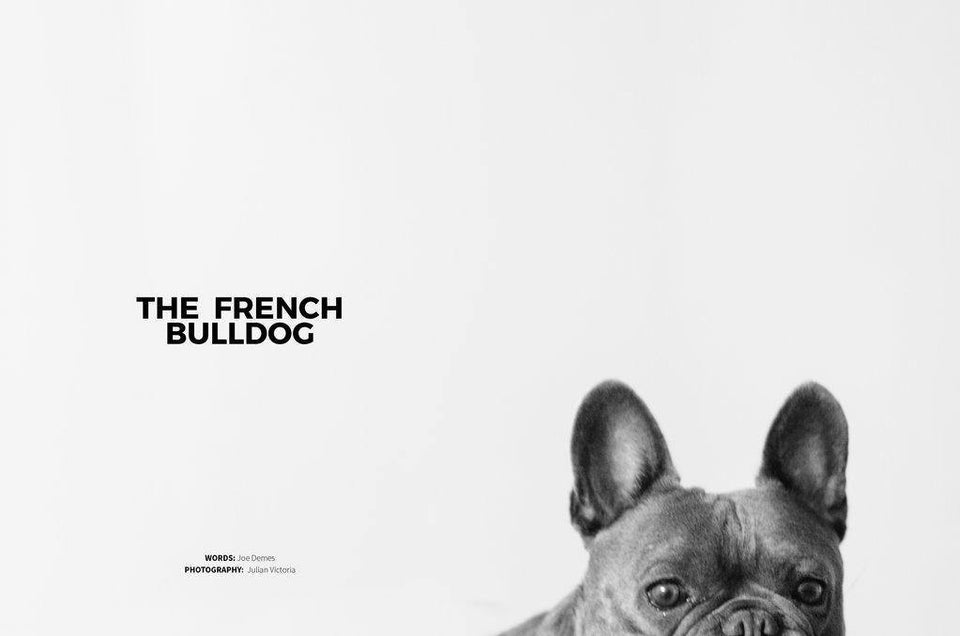 DOG magazin ∣ 5 ∣ Francia Bulldog Urban Fauna