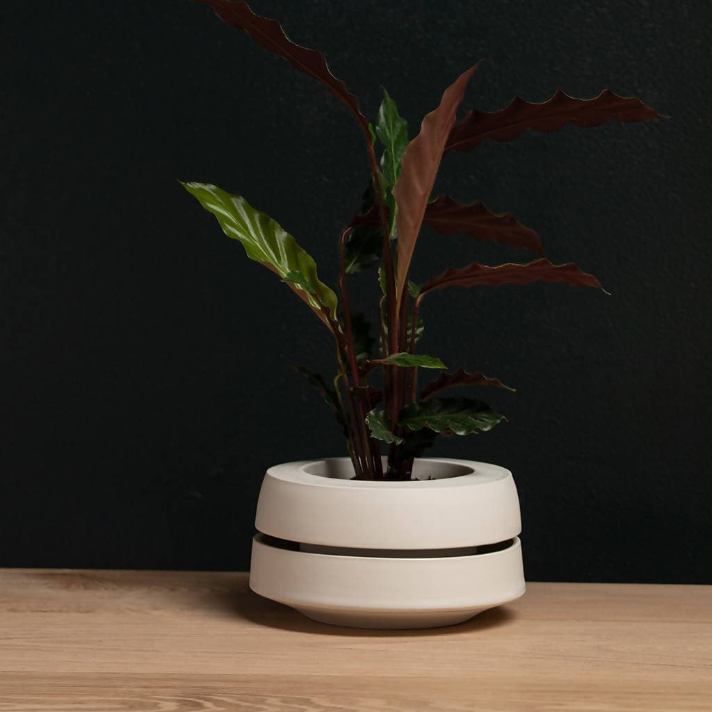 Banded Planter - small