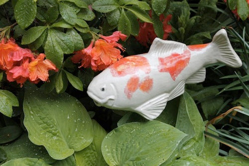 Large Garden Koi - Kohaku - Heart of the Home PA
