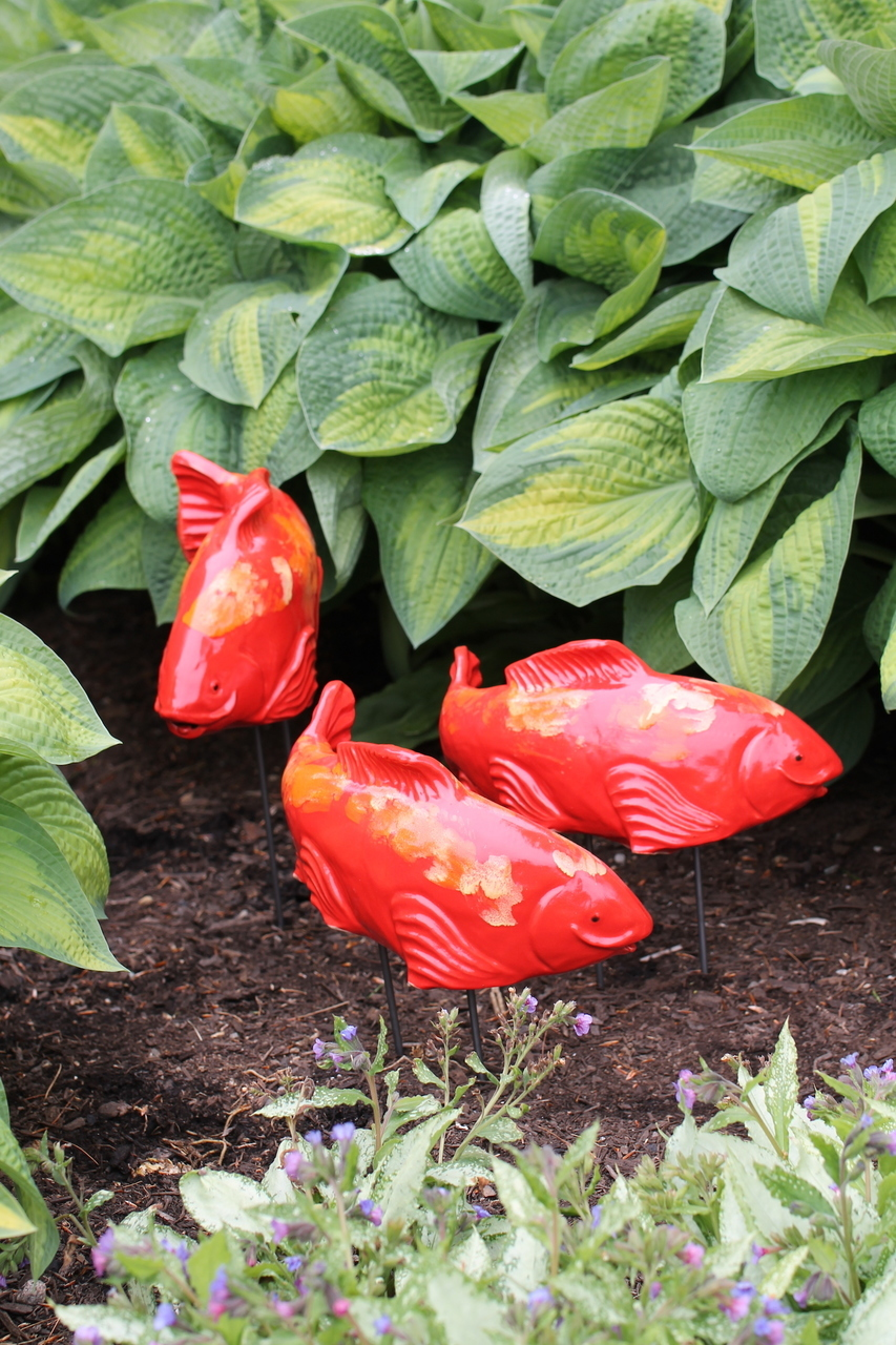 Large Garden Koi - Salsa - Heart of the Home PA