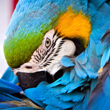 Load image into Gallery viewer, Blue Parrot Zen Puzzle