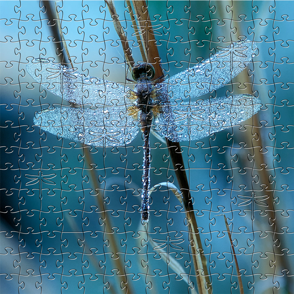 Waiting for the Sun Dragonfly Zen Puzzle - Heart of the Home PA