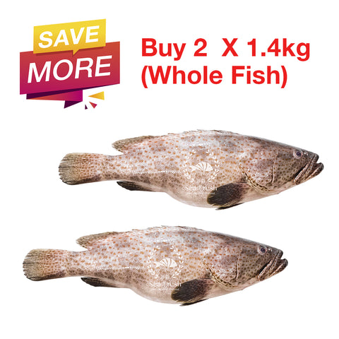 [Double Deal] Grouper Fish / Ikan Kerapu / 石斑鱼 - Whole