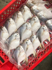 [Double Deal] White Pomfret / Ikan Bawal Putih / 白昌 - Whole