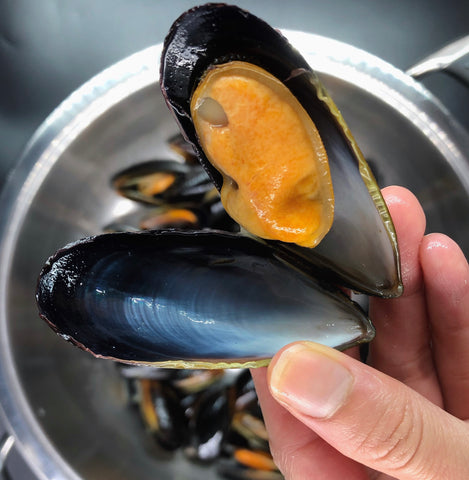 Blue Mussel / 蓝蚌 - Whole Shell