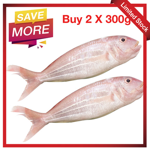 [Double Deal] Long Bream / Ikan Kerisi Panjang / 大长里鱼