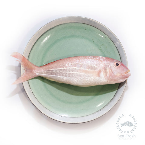 [12.12 SALES] Long Bream / Ikan Kerisi Panjang / 大长里鱼 - Whole