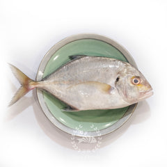 Black Diamond Trevally / Ikan Cermin /  黑镜鱼 - Whole