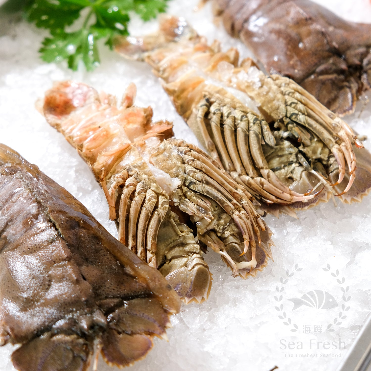 [Double Deal] Slipper Lobster / 虾婆