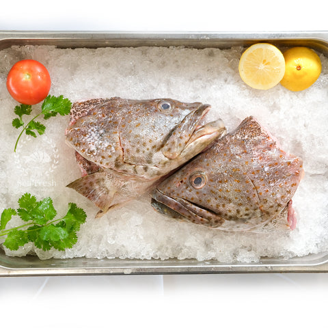 Grouper Head / 石斑鱼头
