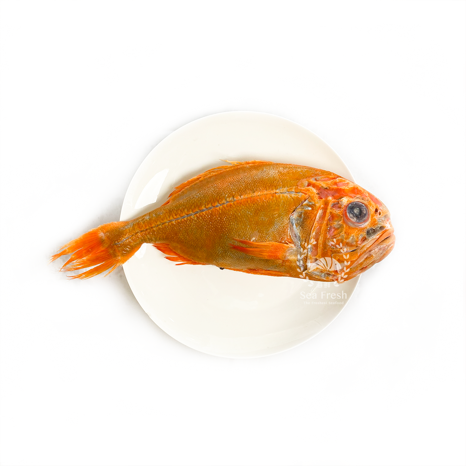 Orange Roughy / 长寿鱼