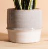 Sansevieria Laurentii ' Snake Plant' in Two-Toned Ceramic Planter