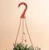 String of Fishhook Hanging Succulent in 6