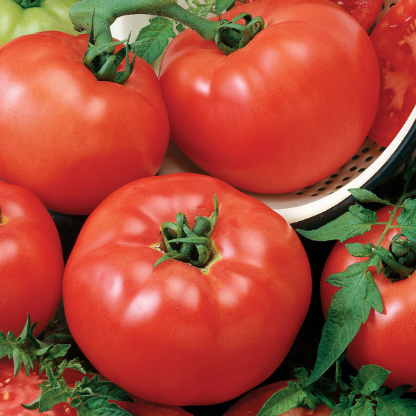 "Chefs Choice Red tomato- 4"" pot"