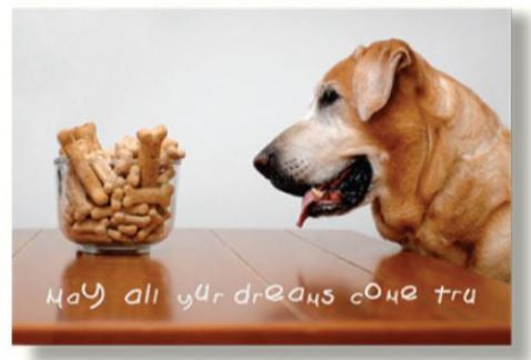 Dog Speak - May All Yur Dreams... - Greeting Card - Birthday