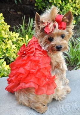 Red Satin Ruffle Dress and Leash Combo