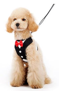 DOGO Easy Bow Tie Harness / Leash Combo