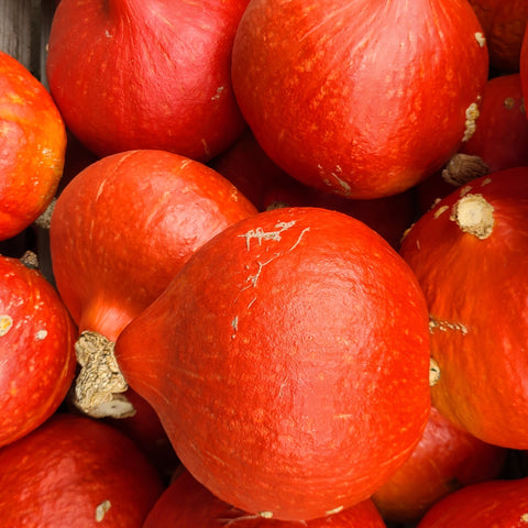 Squash, winter - Red Kuri