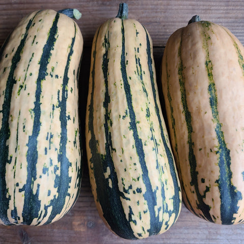 Honey Delicata - Winter Squash - Each