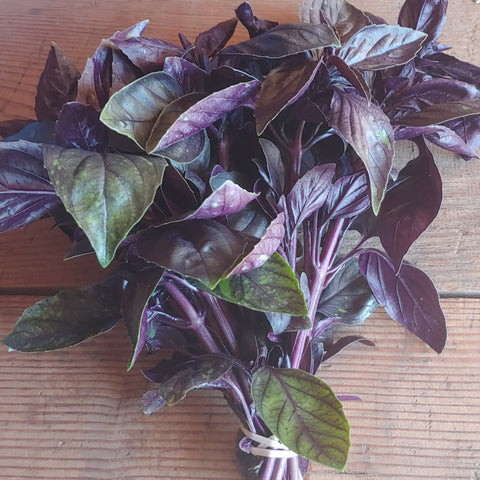 Basil - Purple, bunch