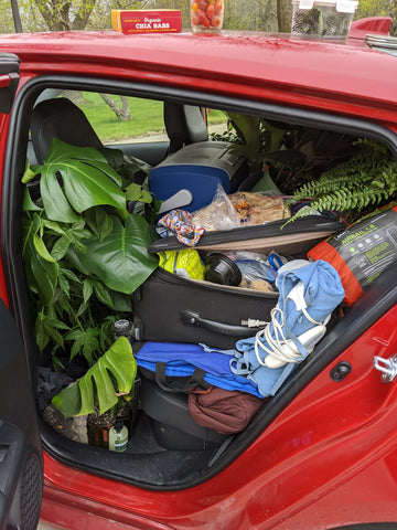 car full of plants, suitcases and food during a road trip