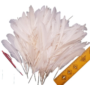 White Quill feathers, bulk