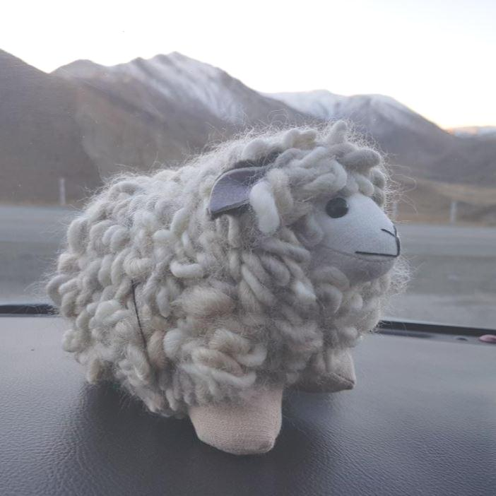 sheep in mountains nz