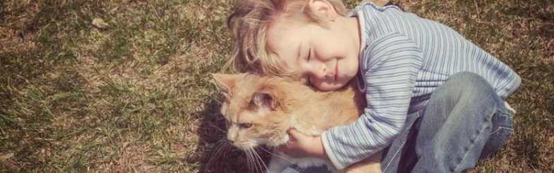 THE HEALTH BENEFITS FROM HUGGING YOUR CAT (ANIMALS)